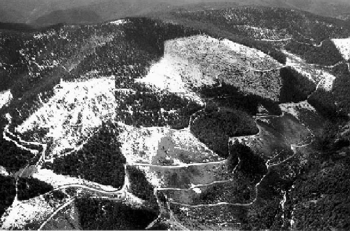 National Forest USFS Washington Idaho /& Montana Kaniksu National Forest US Fores